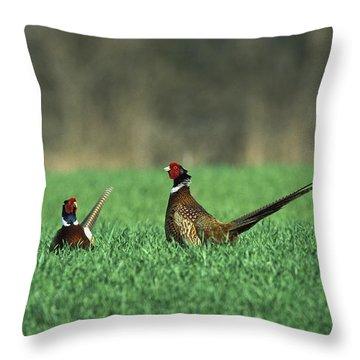 Ring-necked Pheasant Phasianus Throw Pillow by Konrad Wothe