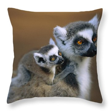 Ring-tailed Lemur Mother Carrying Baby Throw Pillow by Cyril Ruoso