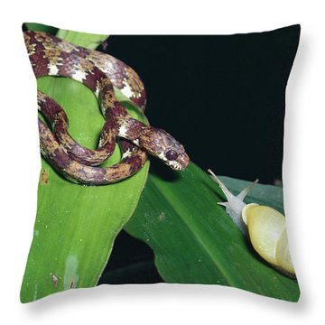 Ringed Snail-eater Snake Sibon Annulata Throw Pillow by Michael & Patricia Fogden