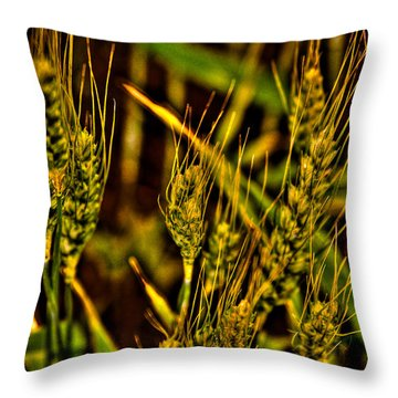 Ripening Wheat Throw Pillow by David Patterson