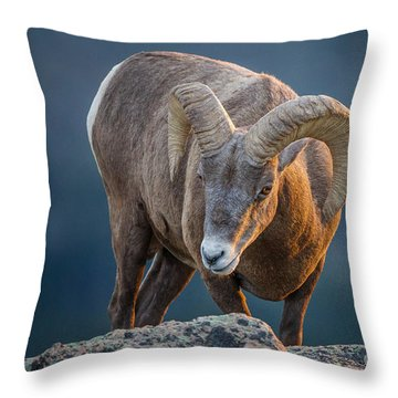 Rocky Mountain Big Horn Ram Throw Pillow by Ronald Lutz