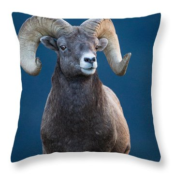 Rocky Mountain Big Horn Throw Pillow by Ronald Lutz