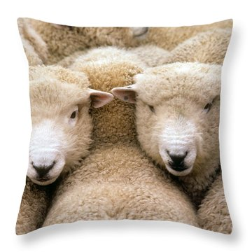 Romney Sheep Throw Pillow by Gregory G Dimijian and Photo Researchers