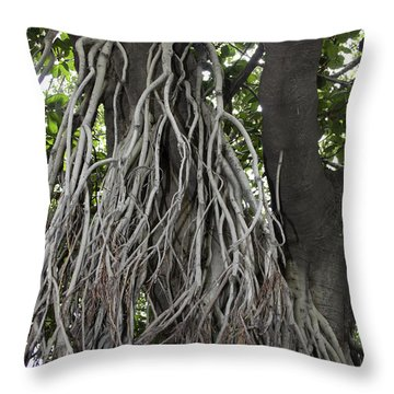 Throw Pillow featuring the photograph Roots From A Large Tree Inside Jallianwala Bagh by Ashish Agarwal