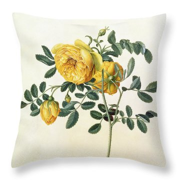 Rosa Hemispherica Throw Pillow by Georg Dionysius Ehret