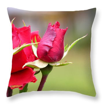 rosa 'Proud Mary' 2964 Throw Pillow