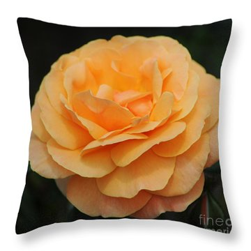 Rose 3 Throw Pillow by Vivian Christopher