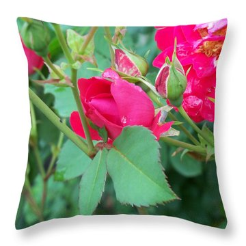 Rose Bud With Water Droplet Throw Pillow