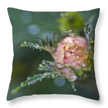 Rose Flower Series 9 Throw Pillow by Heiko Koehrer-Wagner