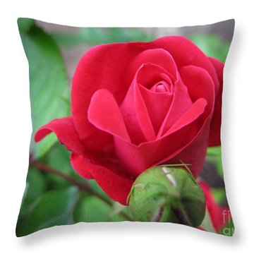 Throw Pillow featuring the photograph Rose In Bloom by Arlene Carmel