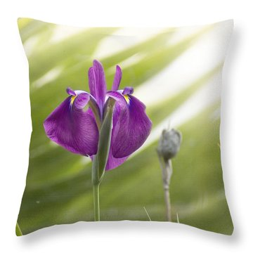 Purple Japanese Water Iris Throw Pillow