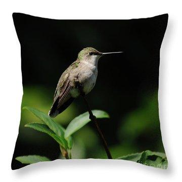 Ruby-throated Hummingbird Female Throw Pillow