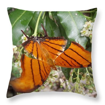 Rudy Daggarwing Throw Pillow by Kimberly Mohlenhoff