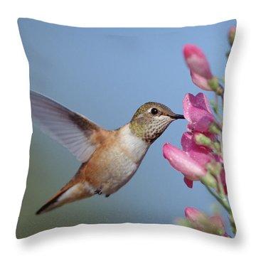 Rufous Hummingbird Juvenile Feeding Throw Pillow