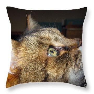 Throw Pillow featuring the photograph Runcius- The King Kitty by Ausra Huntington nee Paulauskaite
