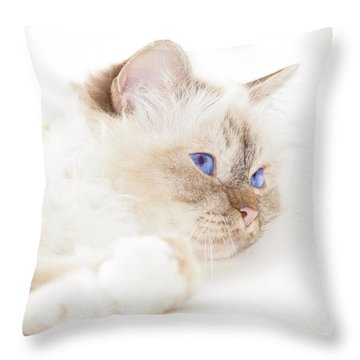 Sacred Cat Of Burma Throw Pillow by Melanie Viola