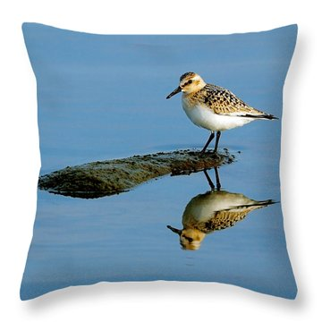 Sanderling Reflecting Throw Pillow by Tony Beck