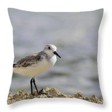 Sanderling Throw Pillow by Teresa Zieba