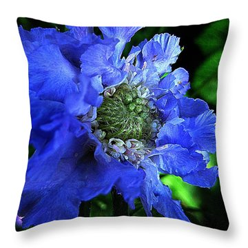 Scabiosa Throw Pillow by Shirley Sirois