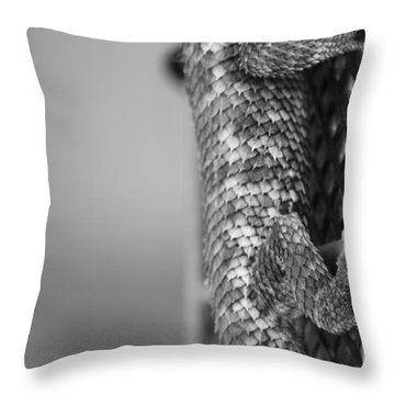 Scale And Grid Throw Pillow