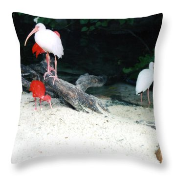 Throw Pillow featuring the photograph Scarlet Ibis And Spoonbills by Maureen E Ritter