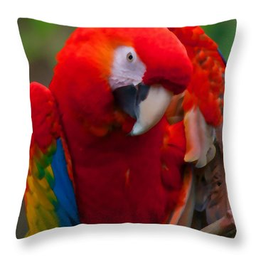 Throw Pillow featuring the photograph Scarlet Macaw by Cindy Haggerty
