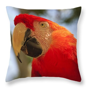 Scarlet Macaw Parrot Throw Pillow by Adam Romanowicz