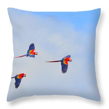Scarlet Macaws Throw Pillow by Tony Beck