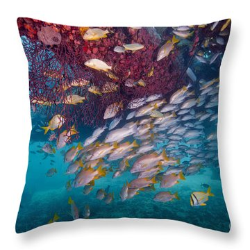 Schools Of Gray Snapper, Yellowtail Throw Pillow by Terry Moore