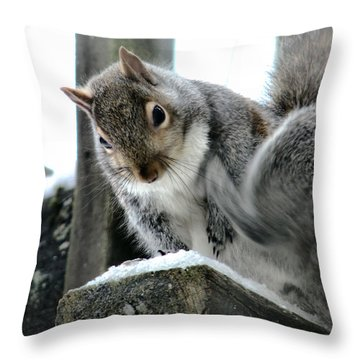 Throw Pillow featuring the photograph Scratching An Itch by Rory Sagner