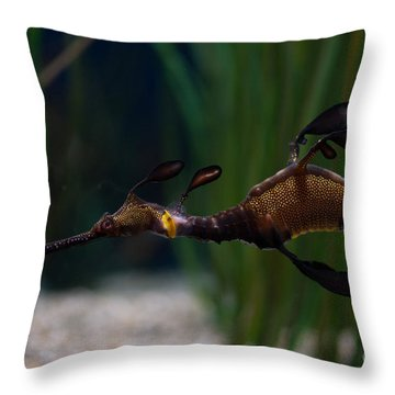 Sea Dragons Throw Pillow by Carol Ailles