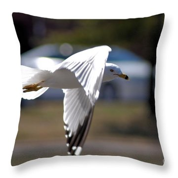 Sea Gull In Flight Throw Pillow
