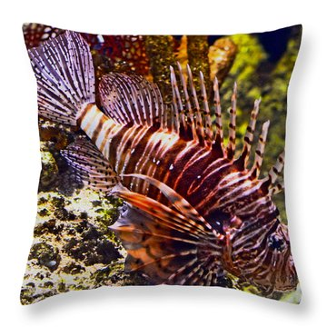 Sea Lion Foraging Throw Pillow by Pravine Chester