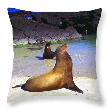 Sea Lions On Genovesa Island Throw Pillow by Thomas R Fletcher
