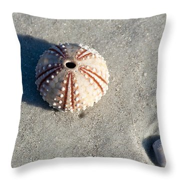 Sea Urchin And Shell Throw Pillow by Kenneth Albin