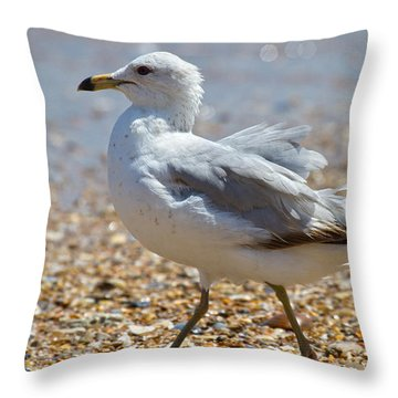 Seagull Throw Pillow by Betsy Knapp