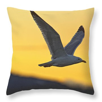 Seagull Flying At Dusk With Sunset Throw Pillow by Robert Postma