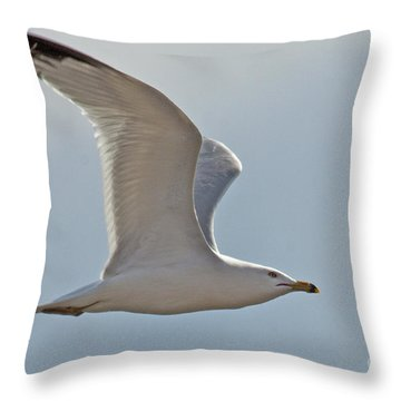 Seagull Soaring Throw Pillow by Darleen Stry
