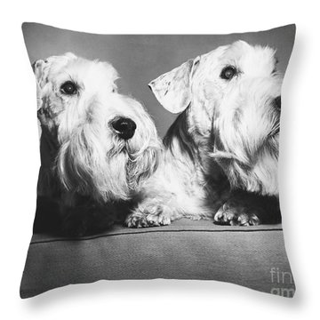 Sealyham Terriers Throw Pillow by M E Browning and Photo Researchers
