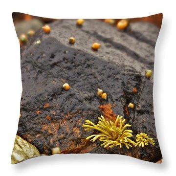 Seashells By The Seashore Throw Pillow