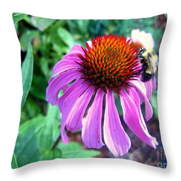 Throw Pillow featuring the photograph Season For Echinacea  by Kathy Bassett