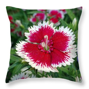 Sedona Dianthus Throw Pillow