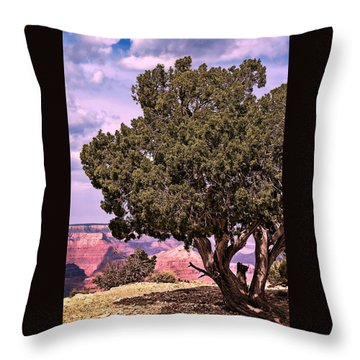 Shade Throw Pillow by Tom Prendergast