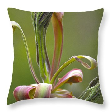 Shagbark Hickory Leaf And Flower Bud Throw Pillow