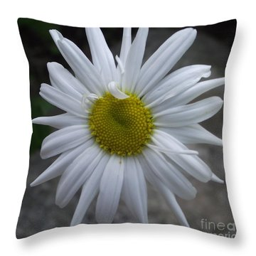 Shasta Daisy Throw Pillow