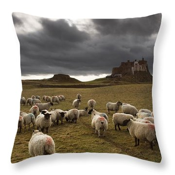 Sheep Grazing By Lindisfarne Castle Throw Pillow by John Short