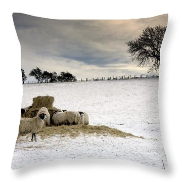 Sheep In Field Of Snow, Northumberland Throw Pillow by John Short