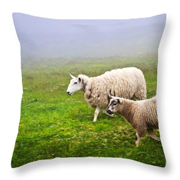 Sheep In Misty Meadow Throw Pillow by Elena Elisseeva