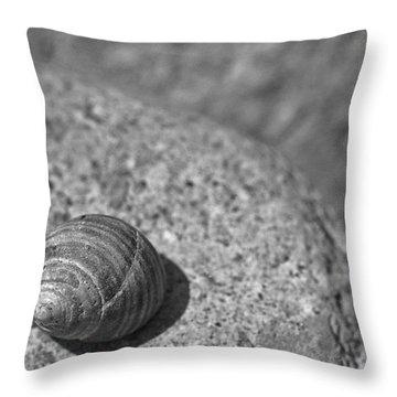 Shells IIi Throw Pillow by David Rucker