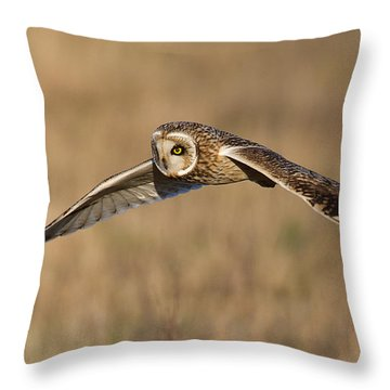 Short Eared Owl Hunting Throw Pillow